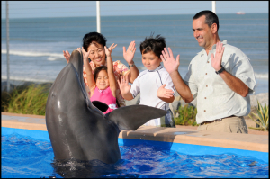 touch and feed dolphins